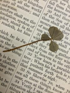 04-25-2015. Shot of a 4-leaf clover I found in an old bible I was getting ready to receive. I was stoked!